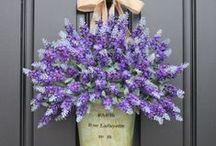 Lavender  ❤ ♡
