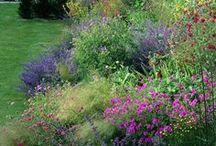 Wonderful garden etc
