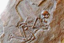 Anatomy & Skeletal / by Sandy Wischnewsky
