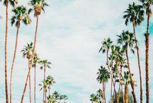 Desert Design / Palm Springs