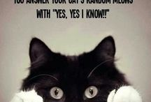 Funny or cute Cats