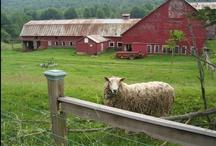 Farm / by miukat