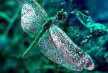 Dragonflies & Butterflies all aflutter / loving butterflies and dragonflies / by ♫♀✌♥ Renee Beanie ☮☽O☾ ❀ ❋ ❁