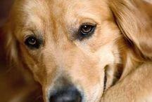 photos de chiens