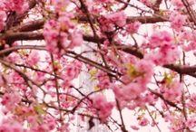 spring.Easter