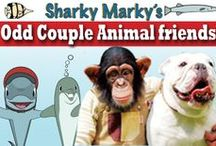 Animal Odd Couples / PiN animal odd couples and unlikely animal friendships. Animal odd couples pics only or the pin will be removed. NO NUDITY/NO CURSING. Family friendly board.    Sharky Marky is the protagonist in an underwater car racing children's picturebook series that focuses on fun, education, kindness and redemption. (Ages 3-7)Sharky Marky and the Big Race and Sharky Marky and the Scavenger Hunt: An Alphabetic Adventure. Bn.com and amazon.  Lance Olsen Sharky Marky author