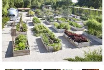 Kitchen Garden Ideas / From Garden to Plate