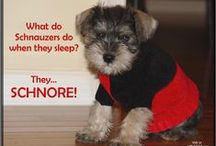 All Things Schnauzers! / We have a Mini Schnauzer so I decided to do a board all things Schnauzers!