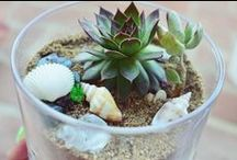 Garden / Terrariums I've made &/or ones that I love that have inspired me to make more! Also, all things gardening.