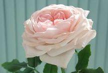Керамическая флористика / Цветы, как живые)