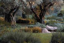 Coastal Garden Design