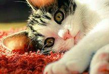 Cats  / Süße Katzenbilder