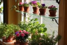 Indoor Gardens / Maybe you don't have much of a yard... No worries! There are tons of creative ways to have the garden of your dreams right in your very own home.