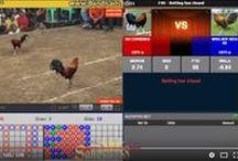 Sabung Ayam / Selaku agen taruhan online kami menawarkan satu produk sabung ayam live dimana anda bisa menikmati pertandingan sabung ayam meskipun anda sedang tidak berada di lokasi berlangsungnya kegiatan tersebut.