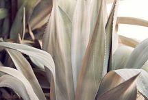 [flora] / plants, horticulture, gardens, flowers
