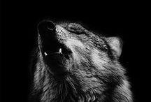 •▪[Wolfs]▪•