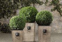 My Ideal Garden / Garden