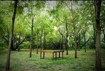 nature desks / nature desks