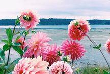 • Nature/Flowers • / Landscape, flowers, nature