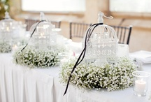 Babies Breath / Million Star / Gyp / by Delicate Elegance Events