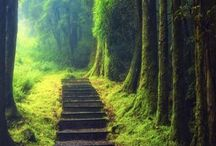 Path / Those who remain unmoved by the wind of joy silently follow the Path...                                Bodhidharma