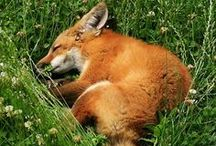 Furry Friends / Animals