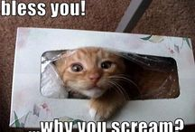 Animal Funnies & Cuteness / Critters that make me laugh or swoon with cuteness