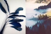 inspirations - translucent solidity / 2016 / inspirations & obsessions fog, pine trees  blues translucent solidity