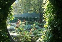 Dream Garden / by Michelle Jackson