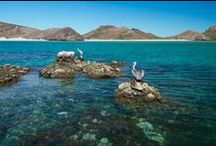 Baja Life / Baja California and Baja California Sur / by Rebecca Firstenfeld