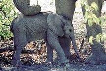 Elephants :) / by Sarah Jinkins