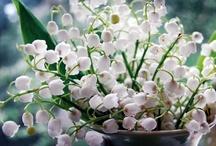 Plant/Garden idea / by Shelley Scribner