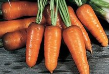 Grow: Carrots / by Laurie Mohr