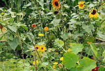 ❤️ growing food