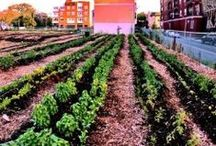 Victory Gardens of Tomorrow and Yesteryear