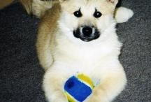 Brio and dog stuff