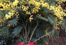 Proches de la nature ! / Notre philosophie: être au plus près de la nature et vous proposer des produits 100% bio  ESHOP www. oceopin.com