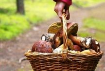 Forest Food & Woodland Wonders / Mushroom, Truffles & Other Earthly Delights / by Linda
