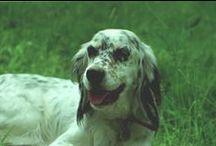 dogs / cosa sarebbe la vita senza un cane ?