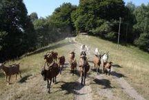 FARM  donkeys cowls gooses sheeps  etc(asini mucche oche pecore ecc.) / vita semplice con gli animali della fattoria