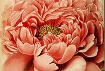 Vintage Flowers & Botanicals / Flower power, vintage floral graphics, botanical illustration