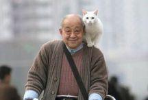 Cats** / I♡ cats