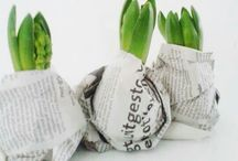 Bulbs / Forcing Bulbs In The Home / by Linda