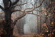 La forêt a sa part de mystère / La forêt est indéniablement au centre de mon texte en cours d'écriture. Cette magnifique nature, cette lumière mystérieuse... Ca ne vous fait pas rêver ?