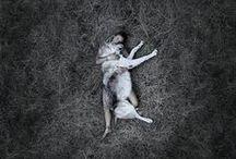 L'amitié entre un homme et un animal se passe de mots / La relation entre l'homme et l'animal en photo ou illustration.
