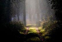 Sombres forêts / La forêt est indéniablement au centre de l'ennemi invisible. Que ce cache t-il entre ces arbres ? Cette pénombre est-elle ténèbres, néant et cauchemar ?