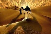 Déserts, plaines arides et sable éternel / La traversée du désert, le dromadaire à la bride, est le quotidien de cet homme. Suivez-le sur le sable brulant, le soleil agressif et les nuits froides.
