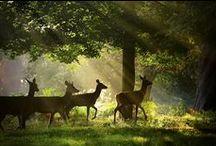 La New Forest au pied de Southampton
