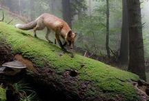 Esprits de la forêt