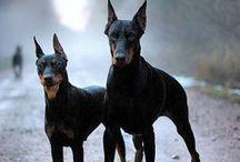 Totti400@AnimalsBeauty / by Erind Së